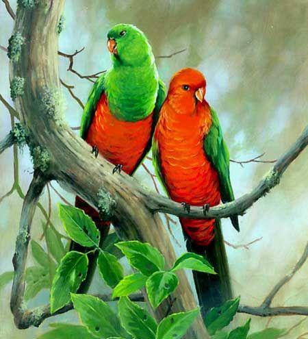Самка і самець королівського папуги - зовнішній вигляд