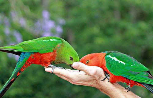 Самка і самець годуються на руці людини