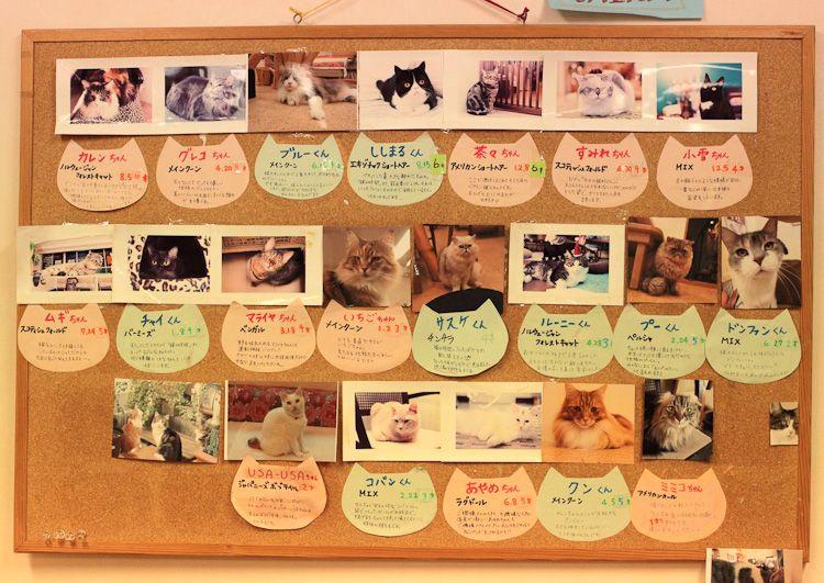 Кішки в кафе