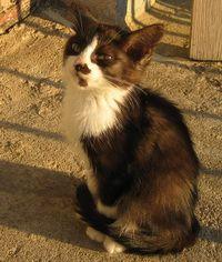 Догляд за кошенятами: завдання для мами-кішки і її господаря