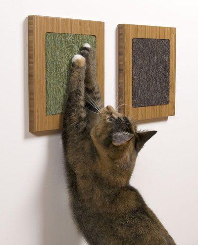 Кішка мітить територію