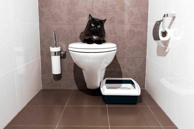 Ось він - культурний кіт!
