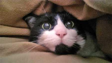 Кішка боїться гучних звуків.