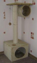 Кішка дряпає меблі і шпалери: як відучити?