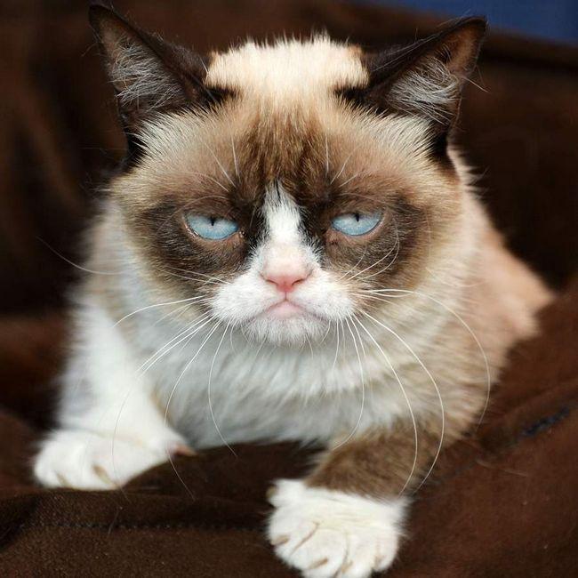 Сердитий кіт стане фігурою музею мадам Тюссо.
