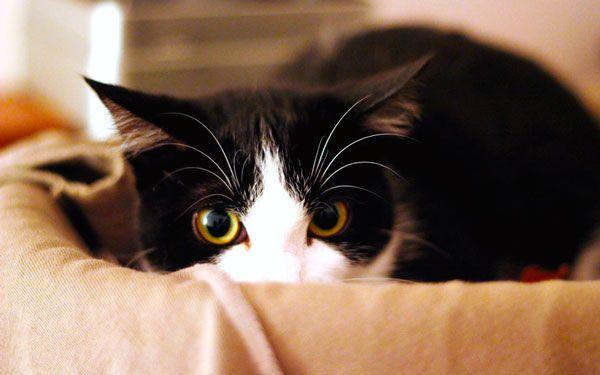Кішка і пилосос: чому домашні вихованці бояться гучних електроприладів