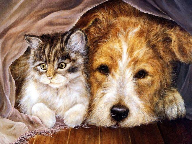 Кішка і собака - життя «пліч-о-пліч»