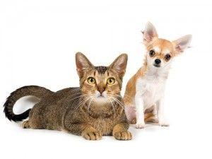 Кішка чи собака