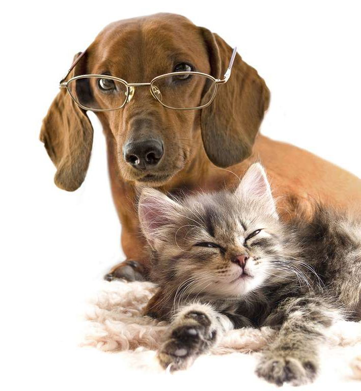 Любителі кішок і собак