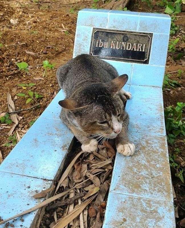 Кішка з Індонезії прожила на могилі господині цілий рік.