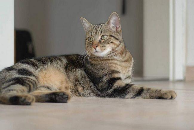 Кішка з івано-франківська стежить за вигулом собак