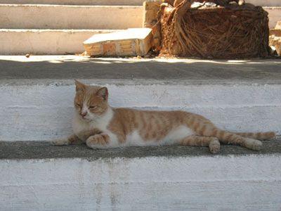 Кішка з острова крит.
