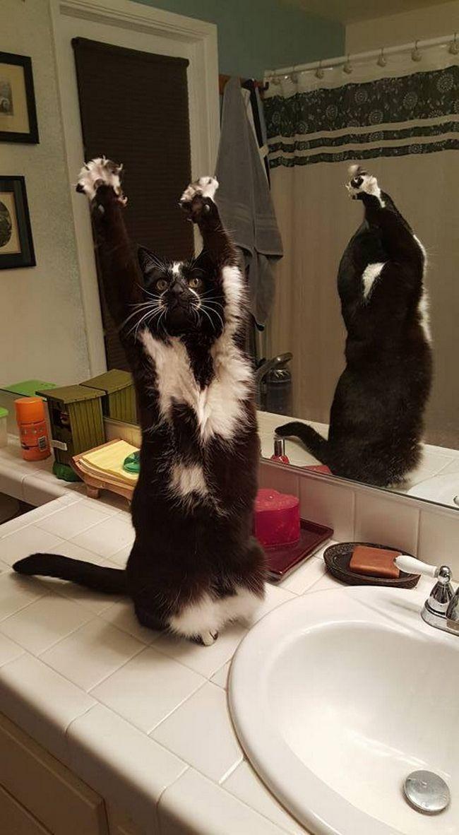 У дзеркала піднімати лапи ще веселіше.
