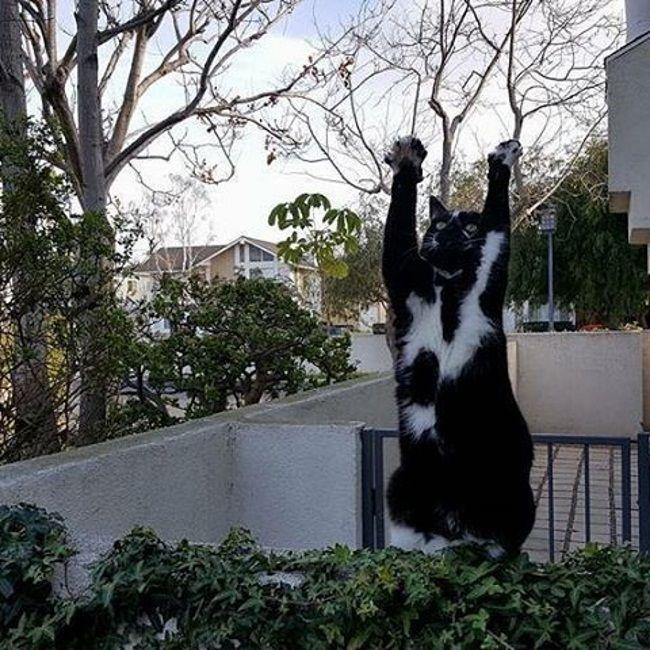 Кішка з піднятими лапами поклоняється світанковим променям.