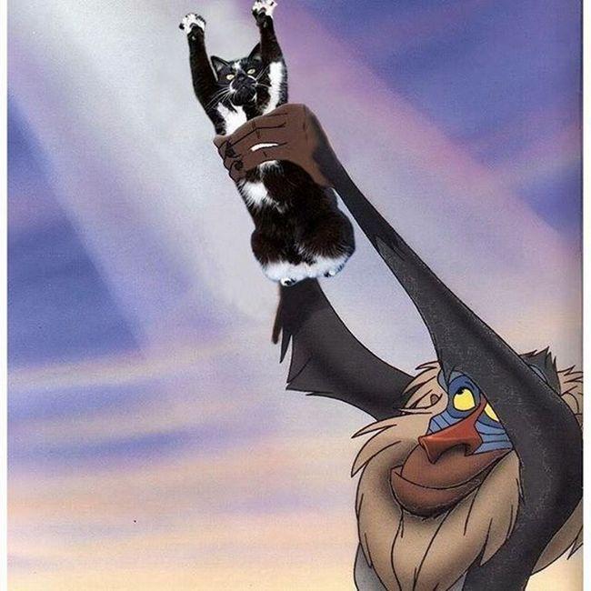 Кішка з піднятими лапами зайняла місце Сімби з мультфільму.