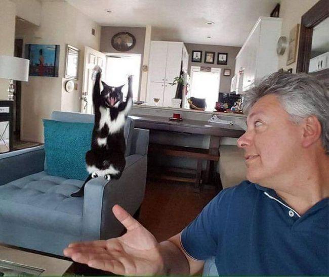Котяче рівновагу дозволяє кішці з піднятими лапами позувати навіть на підлокітнику крісла.