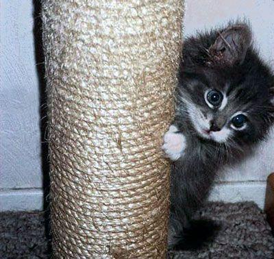 Кішка точить кігті