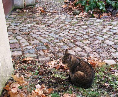 Кішка з Праги, фото