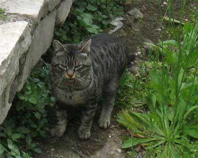 Кішка в римі.