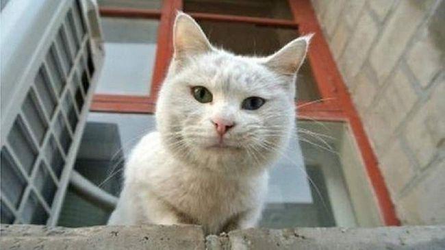 Образити міську кішку неважко: навколо безліч людей, собаки.