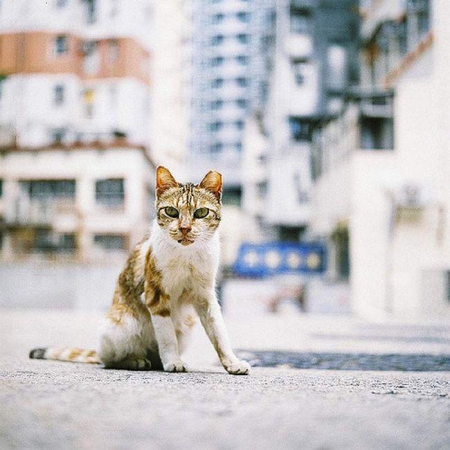 Якщо люди дуже зайняті на роботі протягом дня, прийшовши додому, вони вимагають від кішки підвищеної уваги, вона відповідає їм тим же.
