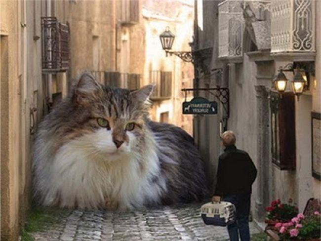 У містах проживає більше кішок, ніж в сільській місцевості.