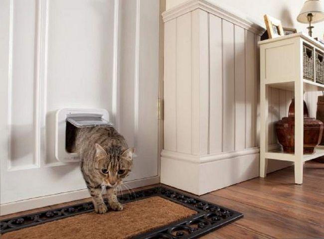 Те, що кіт падає на чотири лапи - це всього лише міф.