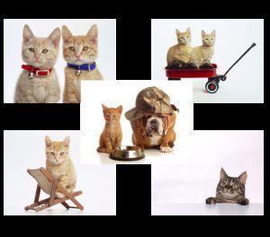 Кішки й кошенята. Шпалери на робочий стіл