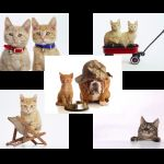 Шпалери на робочий стіл з кішками
