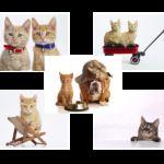 Шпалери з кішками