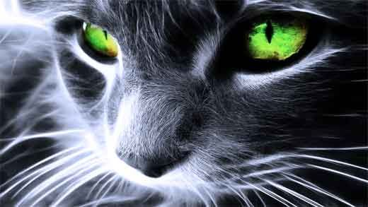 Кішки і містика.