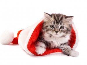 Кішки і новий рік