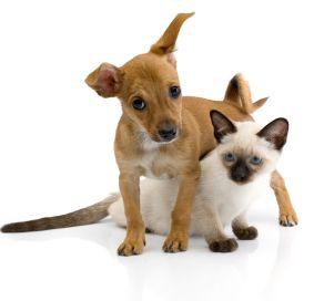 Кот і пес