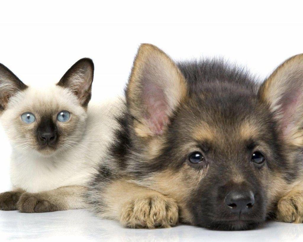Кішка з собакою