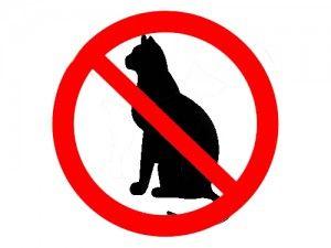 Кішки і заборони