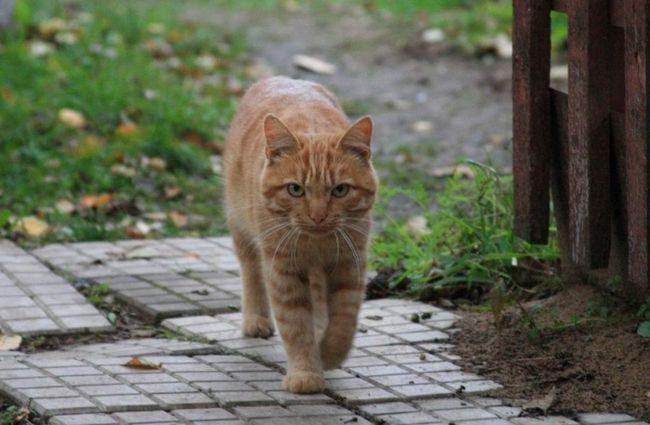Навіть серед беспородістих сільських кішок бувають справжні красуні !.