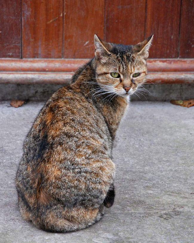 Кішки, що живуть в селі, постійно знаходяться в пошуках їжі.
