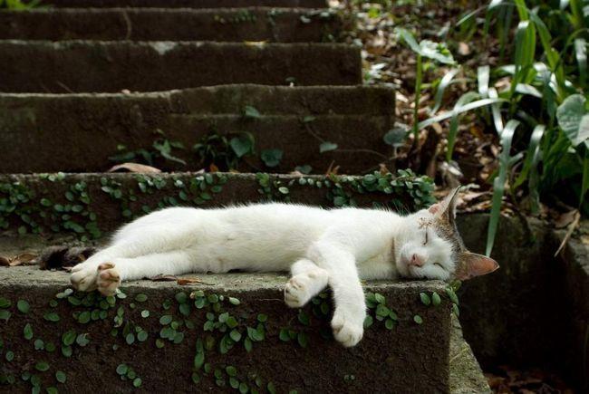 Життя кішок в селі безтурботна і цікава.