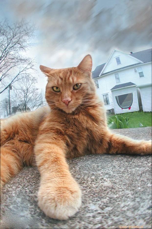 кішки охоронці