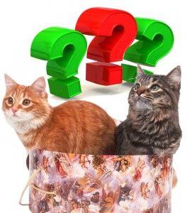 Кішки. Відповіді на запитання