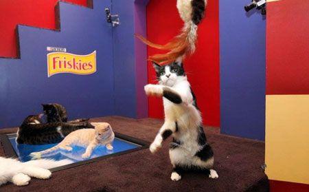 Кішки в facebook