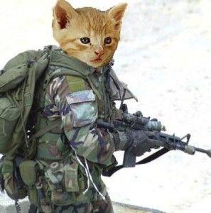 Кішки в велику вітчизняну війну