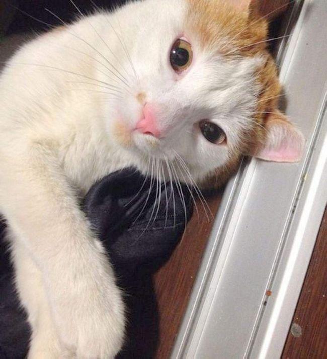 Кот, якого невідомий чоловік зрешетив кулями.