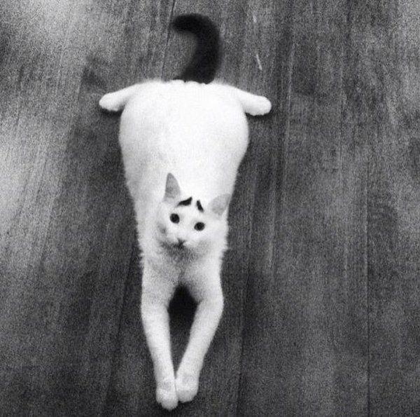 Кот з бровами