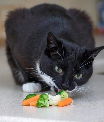 Кот-вегетаріанець їсть овочі