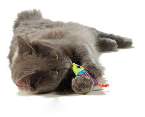 Котовник котячий