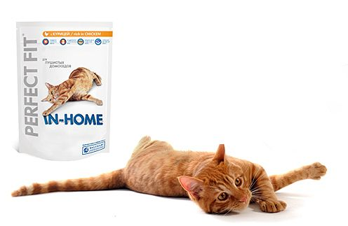 Perfect Fit для котів домосідів
