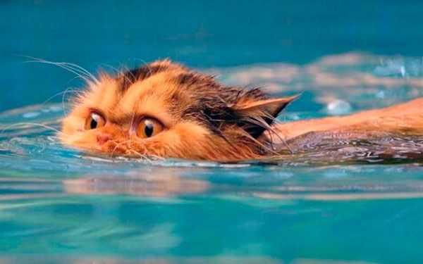 Коти і вода: чому домашні вихованці бояться водних процедур