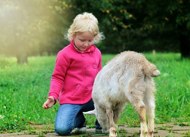 Дитина поруч з кізкою