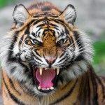 Красиві тварини світу